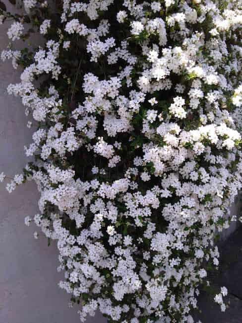 垂れ下がる花