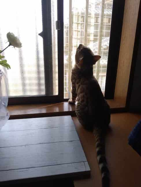 cat-fwens1