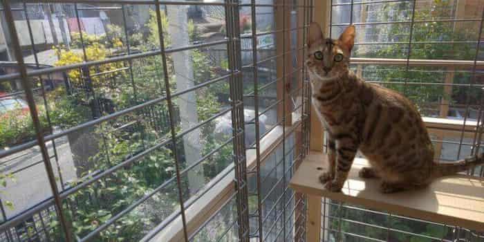 cat-fwens3