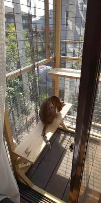 cat-fwens4