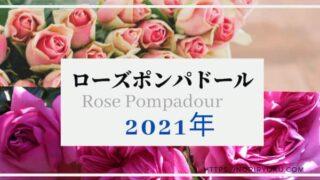 rosepo-top