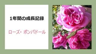 roseponpa5-ai