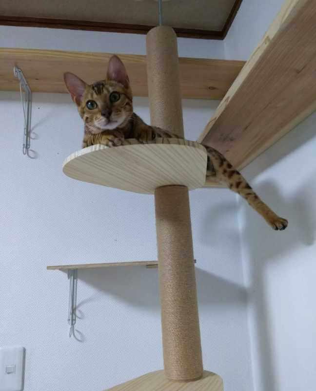 猫のハンモック3