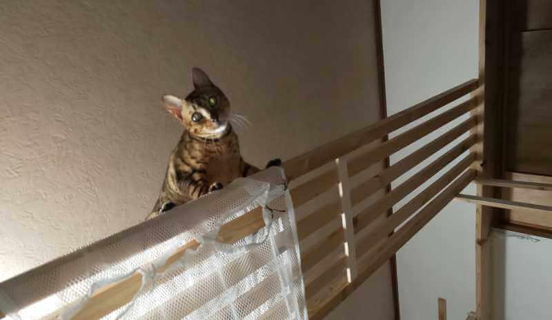 猫のハンモック5