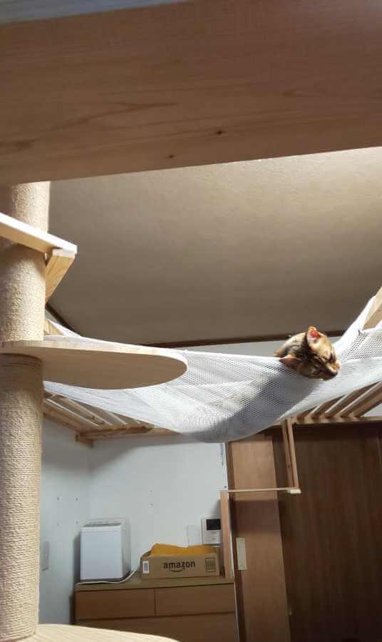 猫のハンモック7