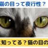 猫の目の機能